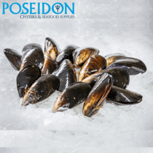 FRESH FISH - Black Mussels from Southern regions of Australia. **FRESH DAILY** 1kg (order by 11.59pm for next day delivery)